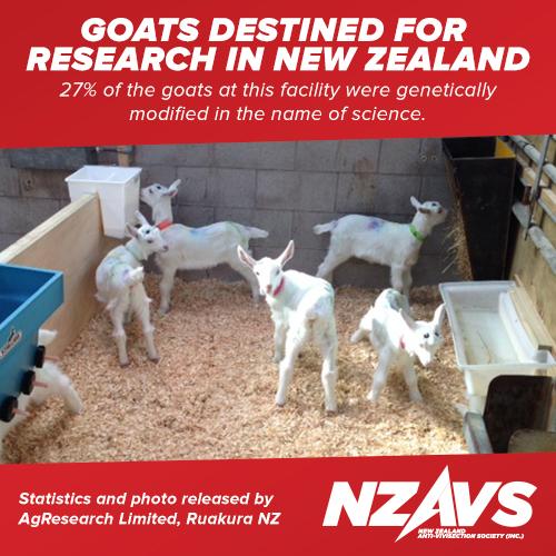 NZAVS-Facebook-Goats