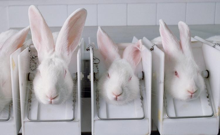 tierversuche-kaninchen-gross